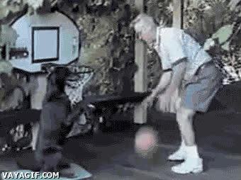 Enlace a Perro alley oop
