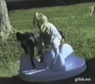 Enlace a Perro compenetrado