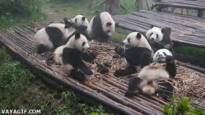 Enlace a Desayuno de pandas