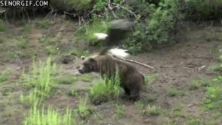 Enlace a Águila troleando a oso