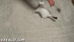 Enlace a Como hacer que dos gatos se choquen