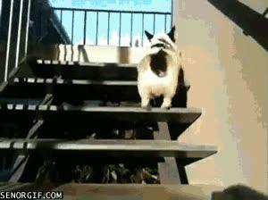 Enlace a Subir las escaleras con estilo