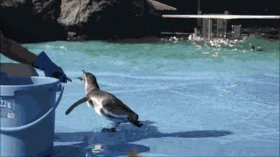 Enlace a ¡Tengo tu sardina y nadie podrá detenerme!
