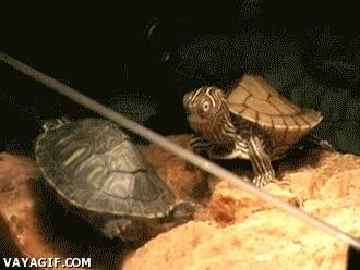 Enlace a Tortuga LOL