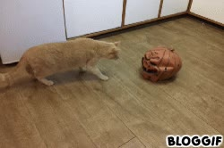 Enlace a Los gatos también se asustan en Halloween
