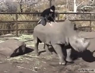 Enlace a A la mierda los caballos, yo quiero cabalgar rinocerontes