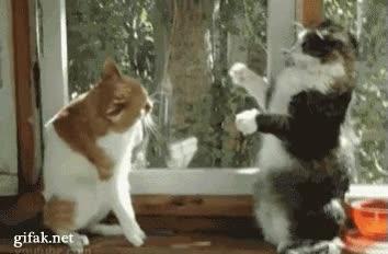 Enlace a Boxeo gatuno
