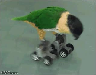Enlace a Pájaro motorizado