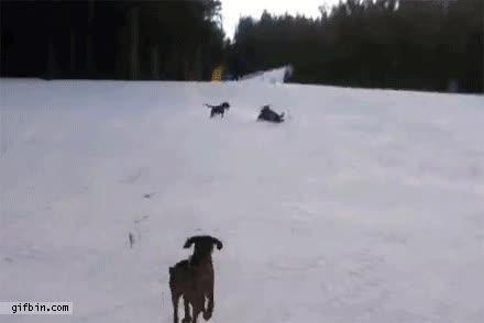 Enlace a Pero perro, dónde vas