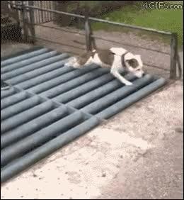 Enlace a Los perros tienen solución para todo