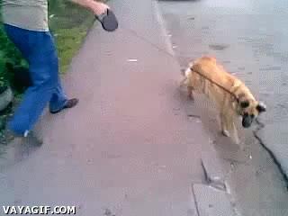Enlace a ¿Perro cobarde o gato valiente?