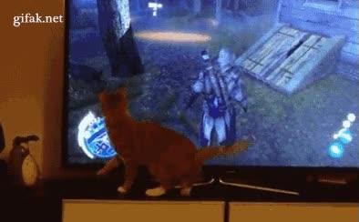 Enlace a Pensamiento del gato: 'No entiendo esta ventana'