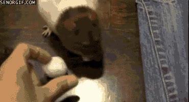 Enlace a El ratón-perro