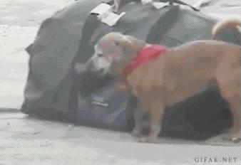 Enlace a El perro landrozuelo