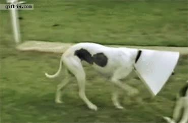 Enlace a Siendo un perro-lámpara no son todo inconvenientes