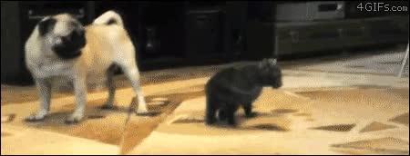 Enlace a Gatito usó croqueta y huida