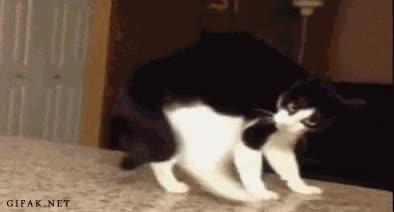 Enlace a Gato ensayando para interpretar a Quasimodo