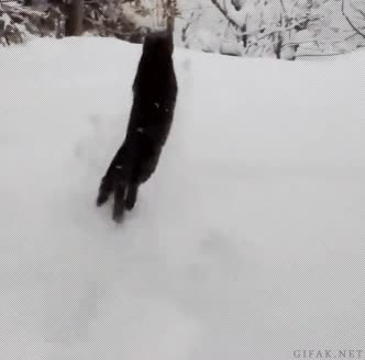 Enlace a ¡Me voy a Narnia!
