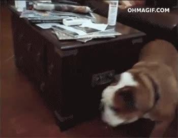 Enlace a Un perro listo