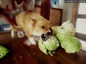 Enlace a ¡Dejadme, soy adicto a la verdura!