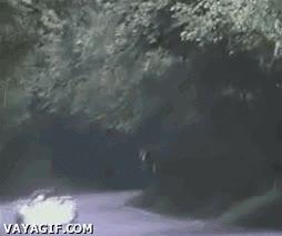 Enlace a ¡El ciervo volador!
