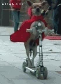 Enlace a ¡Super-Dog, el héroe definitivo en patinete!