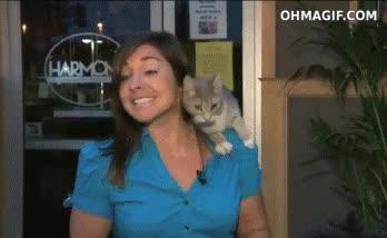 Enlace a Perdona, ¿el casting para Cuánto Gato es aquí?
