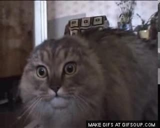 Enlace a Cuando tu gato prueba whiskas por primera vez