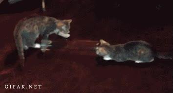 Enlace a Flipar por un tubo, definición felina