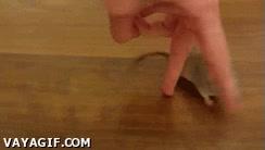 Enlace a Concurso agility para ratones