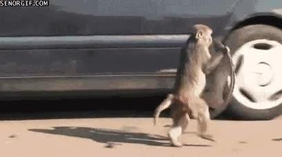 Enlace a La crisis ha generado una raza entera de monos chatarreros