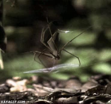 Enlace a Las arañas no sólo esperan a que alguien caiga en su trampa