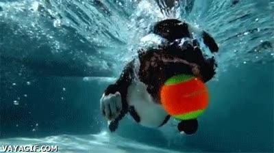 Enlace a Así atrapa un perro una pelota bajo el agua