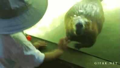 Enlace a ¡Mira mamá, el castor me saluda!