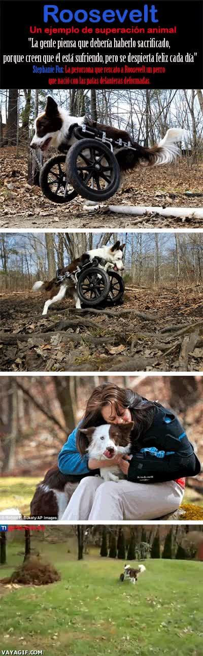 Enlace a Un ejemplo de superación animal