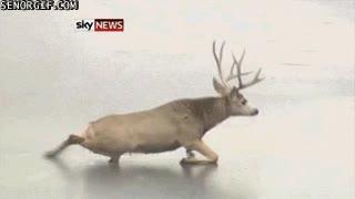 Enlace a ¿Recordáis la escena de bambi? Pues en realidad no mola