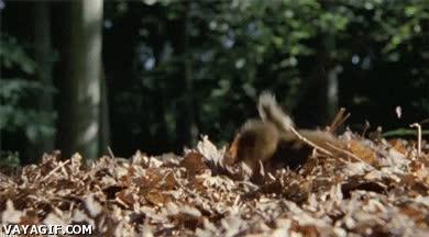Enlace a No hay nada como una piscina de hojas secas para un pato