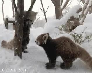 Enlace a ¡Soy un 'mounstro' gigante, temedme!