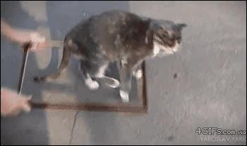 Enlace a El retrato mágico del gato