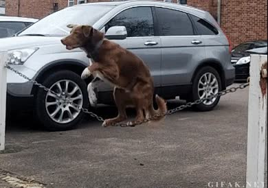 Enlace a Un perro con talento