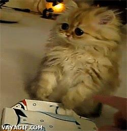 Enlace a ¿Este regalo no es para mí?