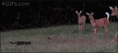 Enlace a ¡Misifú, tengo hambre, sal a cazar algo!