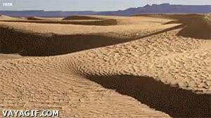 Enlace a Así son dos años en el Sáhara