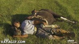 Enlace a Susurrar a los caballos es demasiado mainstream...