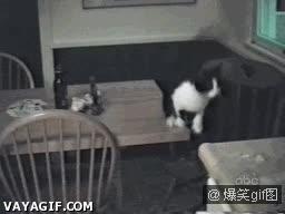 Enlace a Gatos, capaces de las más increíbles piruetas y acrobacias