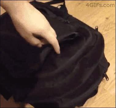Enlace a Lo que NO debes hacer cuando tu gato se meta en la mochila