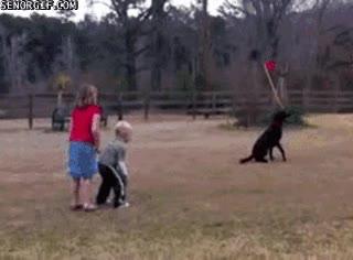 Enlace a La importancia de tirarle la pelota a tu perro gigante dónde no esté tu hijo pequeño
