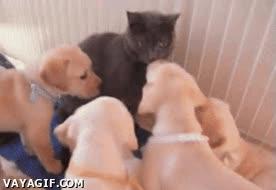 Enlace a ¡Mierda, sacadme de aquí!