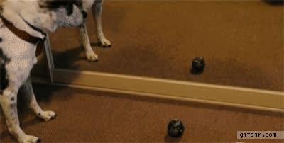Enlace a ¡Oh no, mi pelota! ¿Cómo la cojo ahora?