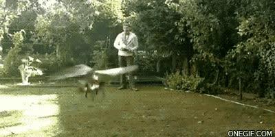 Enlace a Esto es lo que pasa cuando juegas con un helicóptero teledirigido entre árboles